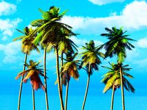 Kokosnusswaldung Stockfotos