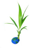 Kokosnusswelt Lizenzfreie Stockfotos