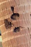 Kokosowa drzewna barkentyna Zdjęcie Stock