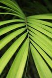 Kokosowy liścia tło Zdjęcia Stock