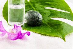 Kokosowa nafciana butelka, jajko kamień z Różowymi mokara orchideami i zieleń, Zdjęcia Royalty Free
