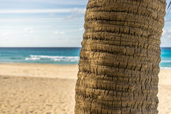Kokosowa palma, bagażnik Zdjęcia Royalty Free