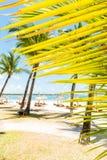 Kokosowa palma i plaża Zdjęcia Stock