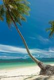 Kokosowa palma na białej piasek plaży Zdjęcia Stock