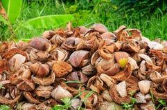 kokosowa skorupa Obrazy Stock
