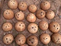 Kokosowa skorupa Obrazy Royalty Free