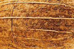 kokosowa tekstura Zdjęcie Royalty Free
