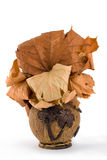 kokosowa waza Zdjęcia Stock