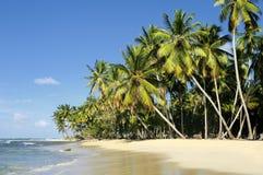 kokosowe palmy Zdjęcie Royalty Free