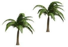 kokosowe palmy Zdjęcie Stock