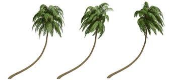 kokosowe palmy Obraz Royalty Free