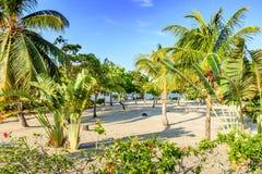 Kokosowe palmy & bananowi drzewa na Karaiby wyrzucać na brzeg Fotografia Stock