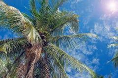 Kokosowe palmy i niebieskie niebo z lekkimi chmurami Zdjęcie Stock