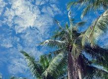 Kokosowe palmy i niebieskie niebo z lekkimi chmurami Zdjęcia Royalty Free