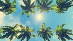 Kokosowe palmy i słońce przy swój zenitem Zdjęcie Royalty Free