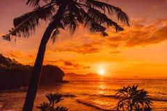 Kokosowe palmy i wschód słońca przy tropikalną plażą zdjęcie stock