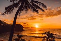 Kokosowe palmy i wsch?d s?o?ca przy tropikaln? pla?? zdjęcie royalty free
