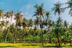 Kokosowe palmy i zielona trawa w zwrotniku zdjęcie royalty free