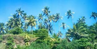 Kokosowe palmy na brzeg ocean indyjski zdjęcie royalty free