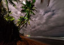 Kokosowe palmy pod blask księżyca fotografia royalty free