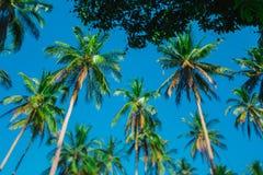 Kokosowe palmy przeciw jasnemu niebieskiemu niebu Korony drzewka palmowe przeciw niebu fotografia royalty free