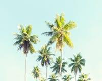 kokosowe palmy przeciw niebieskiemu niebu obraz tonujący Zdjęcie Royalty Free