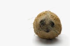 Kokosowe twarze obraz royalty free