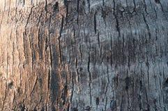 Kokosowego drzewa bagażnika tekstura Obraz Stock
