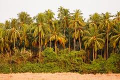 Kokosowego drzewa dżungla Zdjęcie Royalty Free
