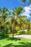 Kokosowego drzewa gaj Obrazy Stock