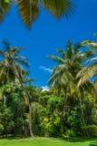 Kokosowego drzewa gaj Obraz Royalty Free