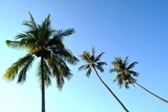 Kokosowego drzewa i niebieskiego nieba tło Obraz Stock