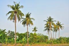 Kokosowego drzewa naturalny krajobraz Fotografia Stock