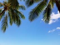 Kokosowego drzewa niebieskie niebo i palmy Fotografia Stock