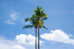 Kokosowego drzewa palma Obrazy Stock