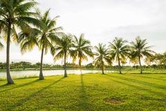 Kokosowego drzewa palma z pięknym sunbeam przy zielonym Pak ogródem Obraz Royalty Free