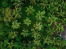 Kokosowego drzewa parka odgórnego widoku zieleni tło Obrazy Stock
