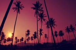 Kokosowego drzewa rocznik Obrazy Stock