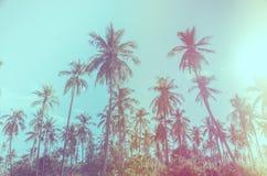 Kokosowego drzewa rocznik Zdjęcia Stock