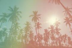 Kokosowego drzewa rocznik Obrazy Royalty Free
