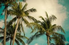 Kokosowego drzewa rocznik Obraz Stock