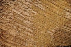 Kokosowego drzewa sieć zdjęcia stock