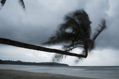 Kokosowego drzewa skręty gdy wiatr Zdjęcia Royalty Free
