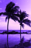 Kokosowego drzewa sylwetka na plaży Fotografia Royalty Free