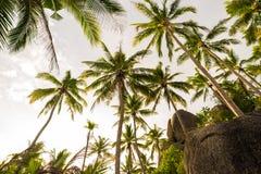 Kokosowego drzewa tła nieba chmura w wyspie Fotografia Royalty Free