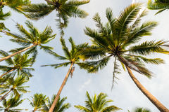 Kokosowego drzewa tła nieba chmura w wyspie Obrazy Stock