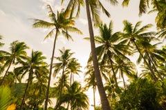 Kokosowego drzewa tła nieba chmura w wyspie Zdjęcia Stock