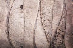 kokosowego drzewa tekstura Zdjęcia Royalty Free