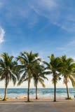Kokosowego drzewa wieczór morze Zdjęcia Stock