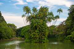 Kokosowego drzewa wyspa w Łabędzim jeziorze Zdjęcie Royalty Free